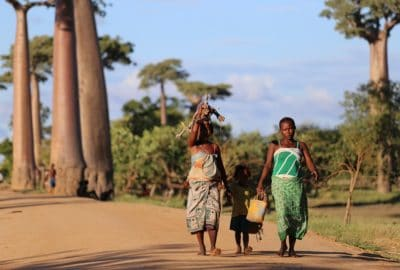 Viaggio in Madagascar, Speciale Estate 2020